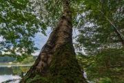 ferienpark-am-waldsee-harz-18