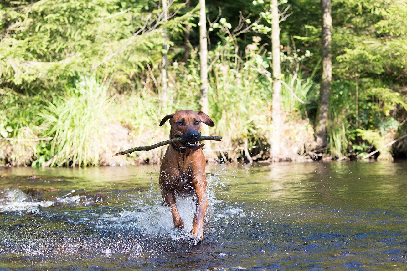 Foto Urlaub mit Hund im Harz