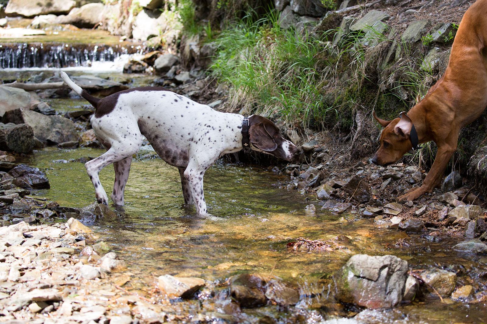 Mit Hund im Harz